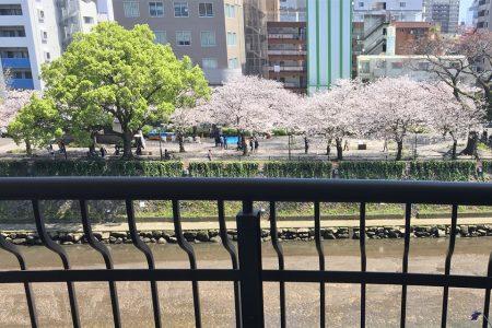 部屋の対岸に見える甲突川沿いの桜並木