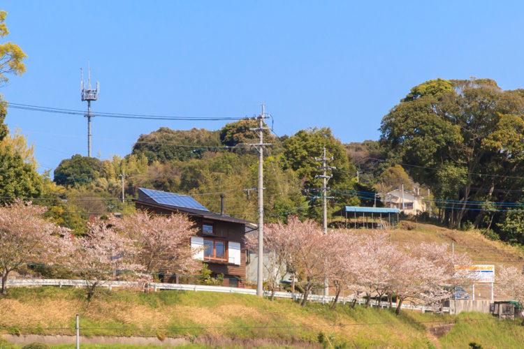 桜ロードの特等席