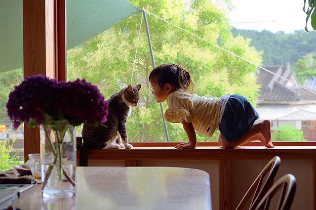 築4年、 愛猫と 小屋と 庭遊び
